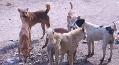 سكان كتامة يدقون ناقوس الخطر من الكلاب الضالة