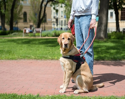 The guide dog blind, how does it work?