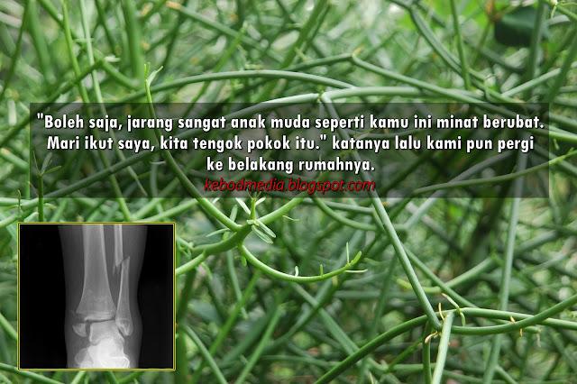 Rawat Tulang Patah, Ketuat, Sakit Sendi Tulang Dengan Pokok Tetulang