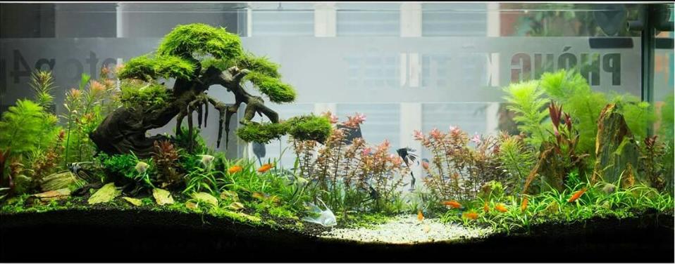 hồ thủy sinh bon sai cấy rêu và cây cắt cắm