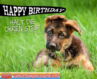 Geburtstagswünsche für Hunde
