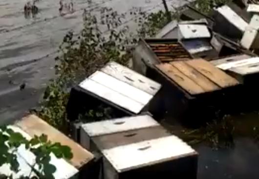 Τεράστια πλημμύρα σε μελίσσια: Δείτε το σοκαριστικό βίντεο που βλέπουν όλοι οι μελισσοκόμοι του κόσμου...