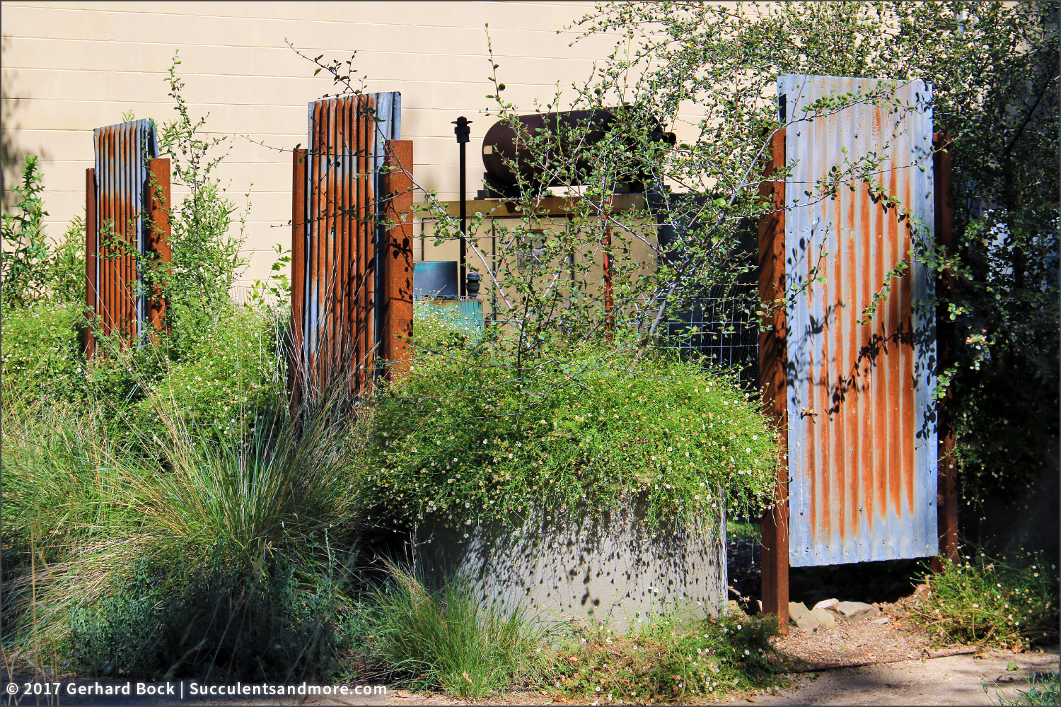 succulents and more: summer vignettes from the uc davis arboretum