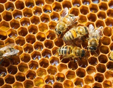 Υπό απειλή ο μελισσοκομικός κλάδος. Τι γίνετε με τις επιδοτήσεις;