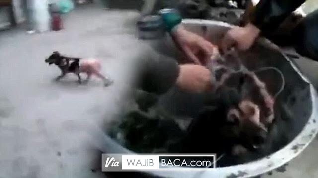 Direbus Hidup-Hidup! Kedua Pria Ini Kaget Anjing yang Sudah Dikuliti Hidup Lagi