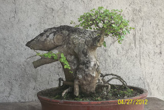 bonsai extrem