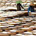 PT Mitra Patimas Pekalongan Lampung Timur Diduga Beroperasi Ilegal
