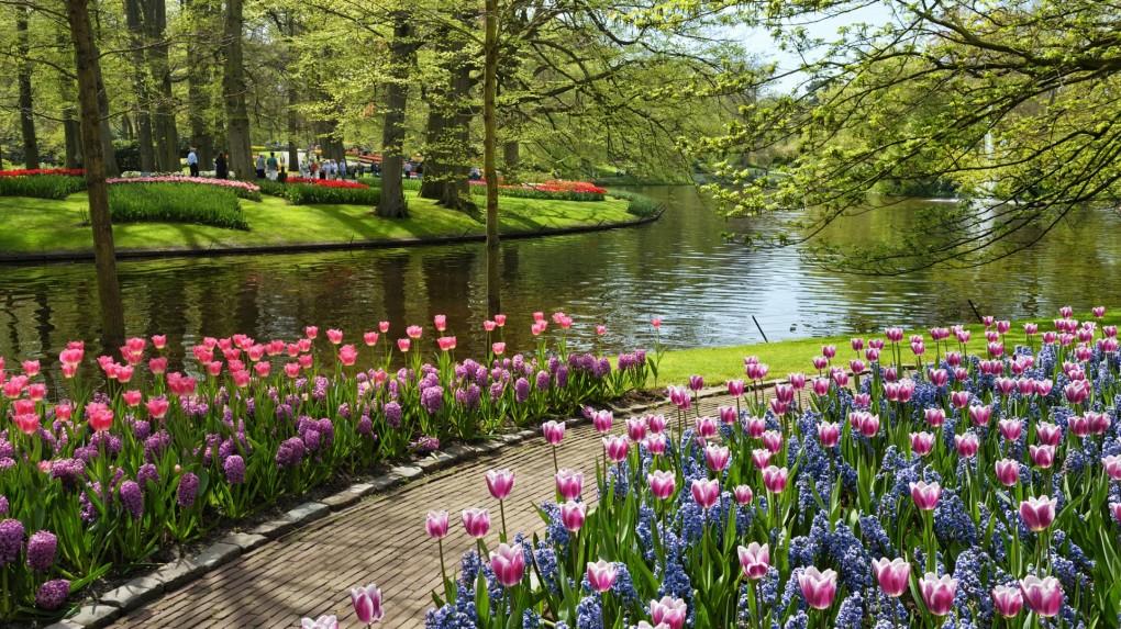 Gambar Pemandangan Taman Bunga | Gambar Pemandangan