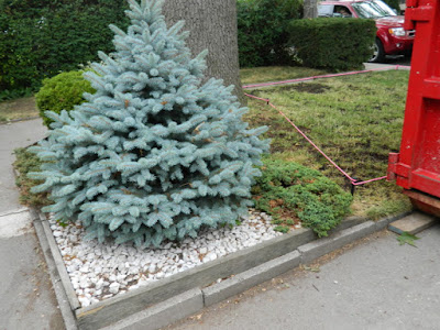 Baby Point front garden renovation before Paul Jung Gardening Services Toronto