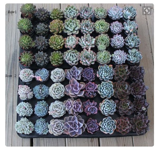 Succulent inspiration for a quilt
