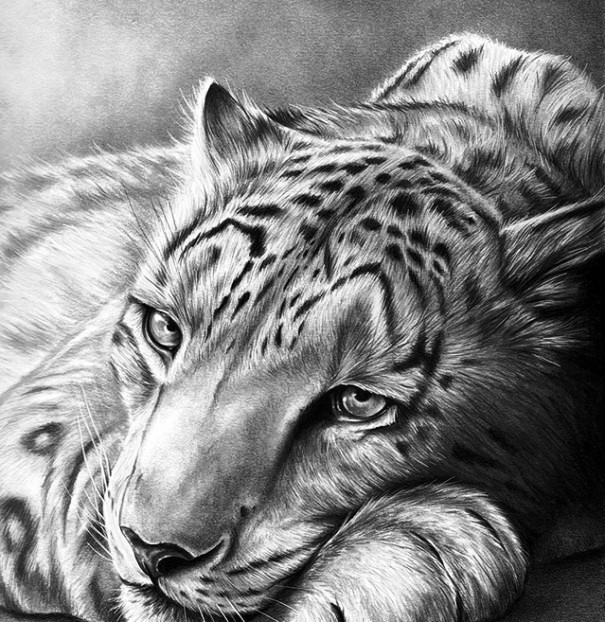 Top Pencil Drawings