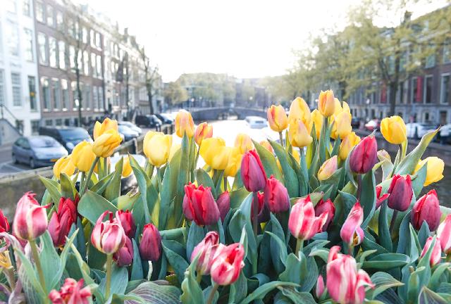 Condições Climáticas em Amsterdã em Maio