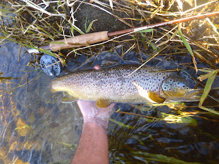 Chateauguay River Brown Trout