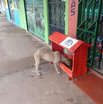 """""""Adote 1 amor"""" criado por voluntárias em Guajará-Mirim"""