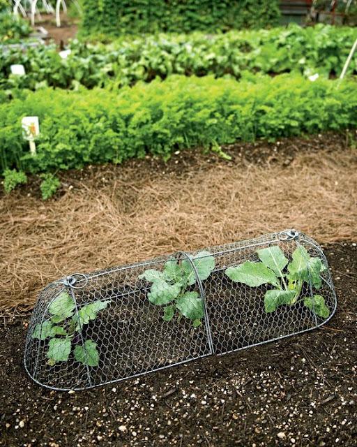 วิธีทำป้องกันสวนผัก