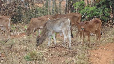 SAM 2096%2B %2BCopy - Ufugaji katika shamba la Rushu Ranchi Kisarawe