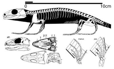 Paleothyris
