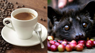 The Amazing Health Benefits Of Luwak Coffee For Health And Beauty - Healthy T1ps