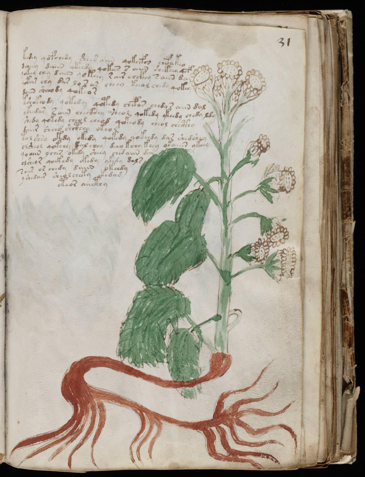 manuscrito059