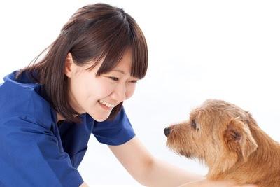 traseira paralisada em cães