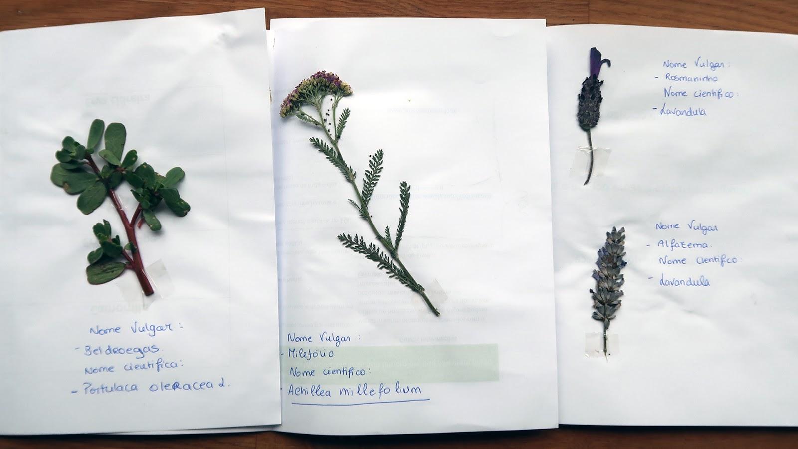 http://www.cantinhodasaromaticas.pt/produto/workshop-criancas-herbario-ervas-aromaticas/