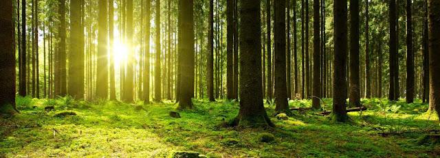 Derecho ambiental y Derecho Administrativo