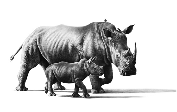 03-Mother-and-baby-Rhino-Richard-Symonds-Wildlife-Fine-Art-Drawings-a-Painting-and-a-Video-www-designstack-co
