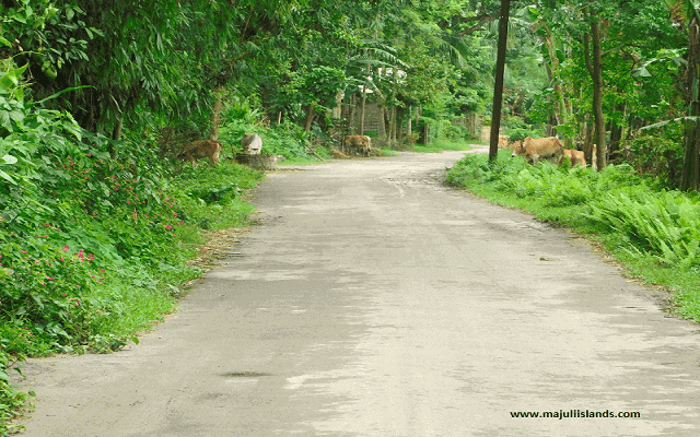 Bongaon Road Of Majuli Island