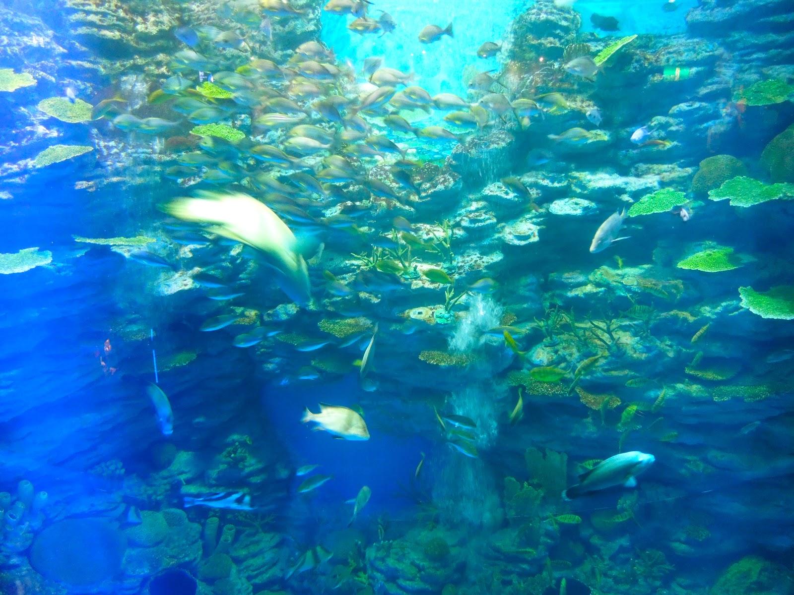 Busen Aquarium