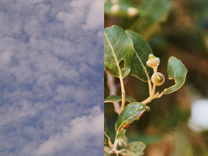 Kroatien Natur, blauer Himmel und Pflanzen, Sommerurlaub, Campingurlaub Fotos August