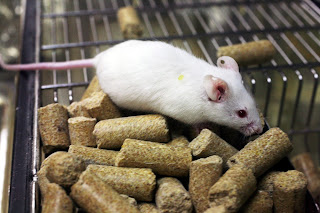 Lab_mouse_mg_3140.jpg