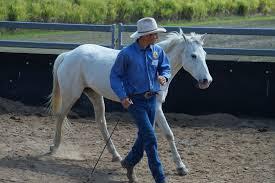 Entrenamiento de caballos con videos de equitación