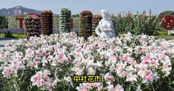 台中后里|中社觀光花市|2019百合花和數十種花海美翻天