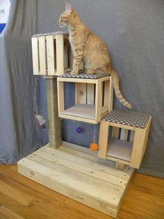 Juegos DIY de madera para gatos