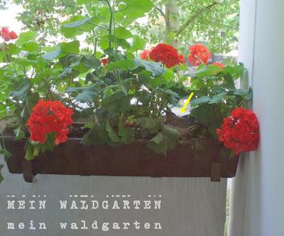 mein waldgarten vogelnest im blumenkasten auf dem balkon. Black Bedroom Furniture Sets. Home Design Ideas