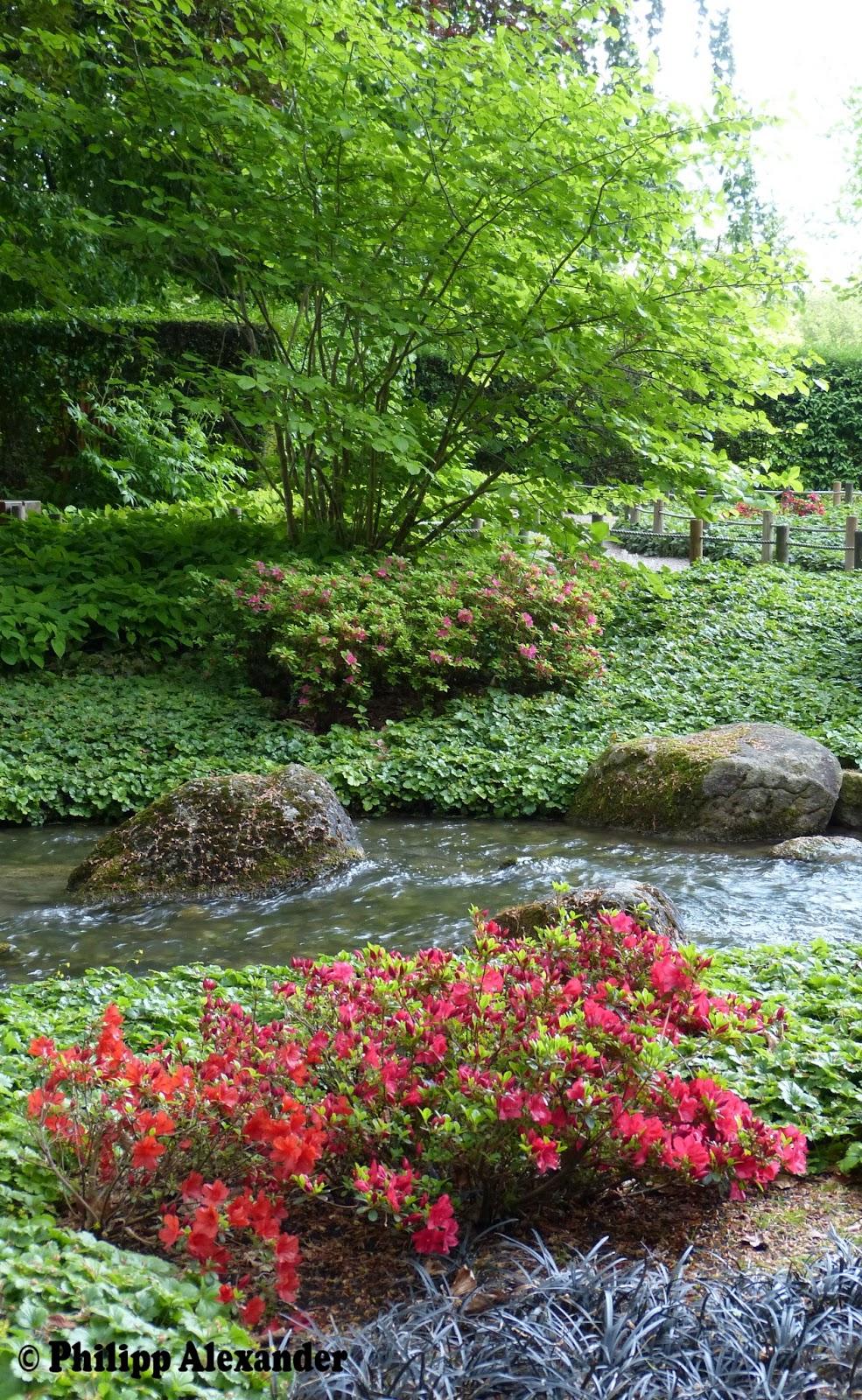 Philipp Alexander Augsburg Japanischer Garten Im Mai