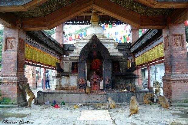 Swayambhunath, scimmie