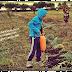 Agricoltura Naturale: parliamo di Biodinamica
