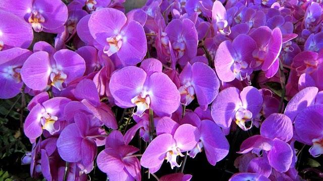 25 ảnh phong lan rừng đẹp nhất nước ta