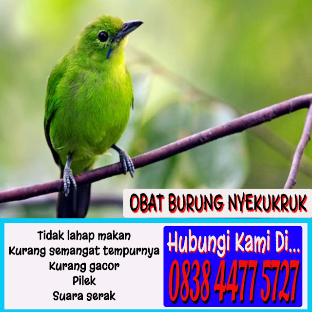 Obat Gangguan Pernafasan Burung