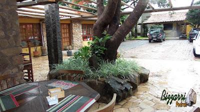 Detalhe da parte externa do pergolado de madeira com o canteiro de pedra no pé da árvore com as barbas de serpente com o piso de pedra com cacos de São Tomé e a parede de pedra.