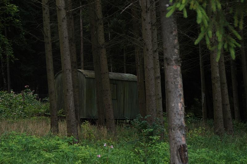 Wald im Herbst - September Monatsrückblick