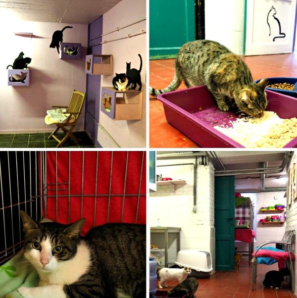 cat rescue adoption