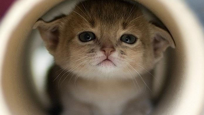 Il salvataggio di un gattino recalcitrante