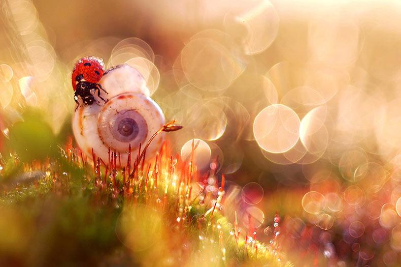 Fotógrafa polaca muestra la belleza de la naturaleza que normalmente no vemos