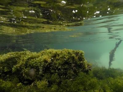 melihat laguna kakaban island