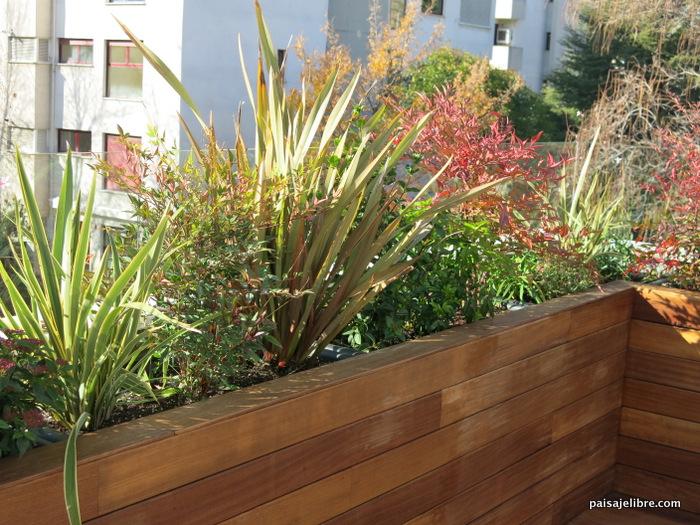 Las 6 mejores plantas de sol para terrazas y ticos for Que plantas poner en una jardinera