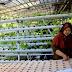Oleh-Oleh TMMD Desa Panggang Mulai Kembangkan Tanaman Hidroponik
