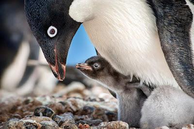 Penguins Movie Image