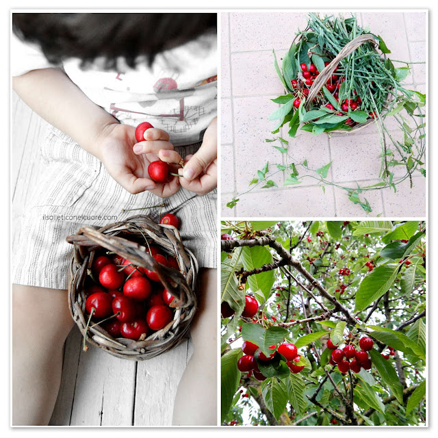 raccolta-ciliegie